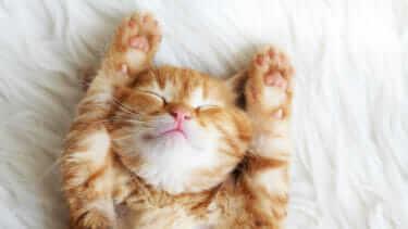 猫 寝相 心理