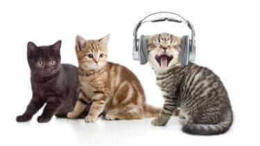 猫がうるさいほど鳴くのはどうして?原因と対処法を一挙ご紹介!
