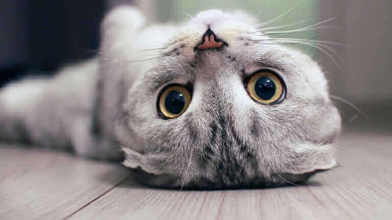 猫 の 肥満 見分け 方