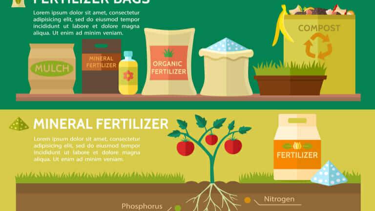家庭菜園 土作り 時期 肥料