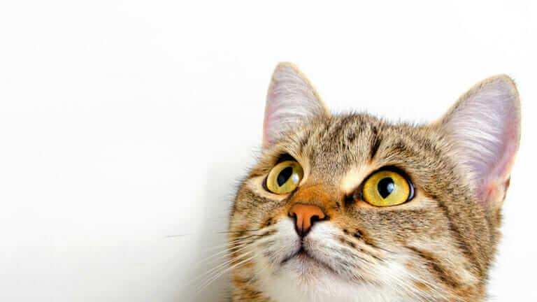 猫 口 臭い 原因