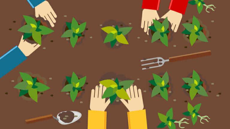 家庭菜園 土作り 時期|レタスの種まき