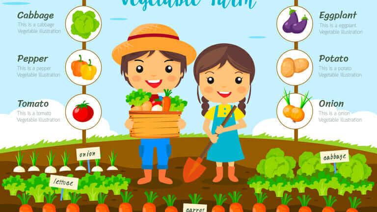 家庭菜園 土作り 時期 小松菜の育て方