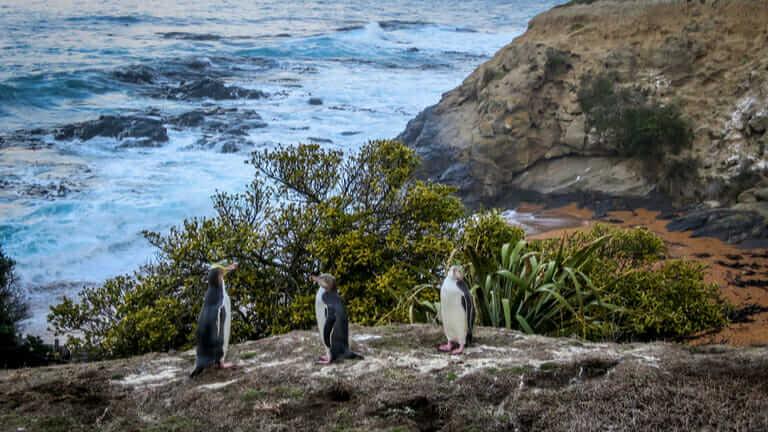 ニュージーランド ペンギン 季節 場所