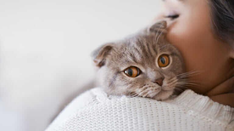 猫 痩せる 原因