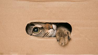 猫 ダンボール箱
