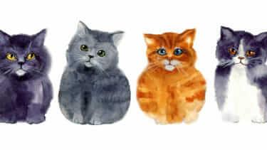 猫の抜け毛対策にはファーミネーター!抜け毛対策は大事。してあげないと病気に!