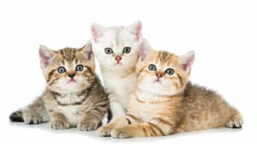 猫が喜ぶツボマッサージで仲良く健康対策