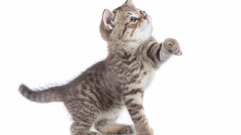 猫 ご飯を食べない 病気