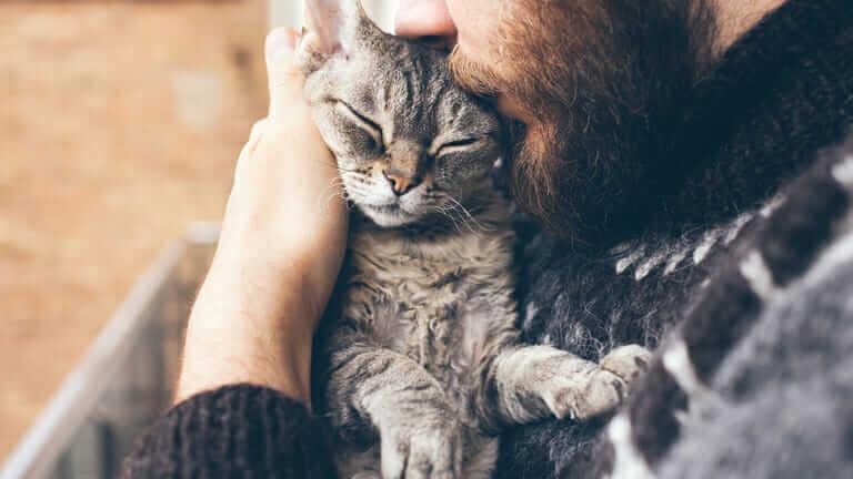 一人暮らし 猫 可哀想