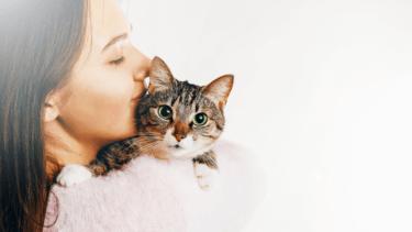 猫 唸る 原因