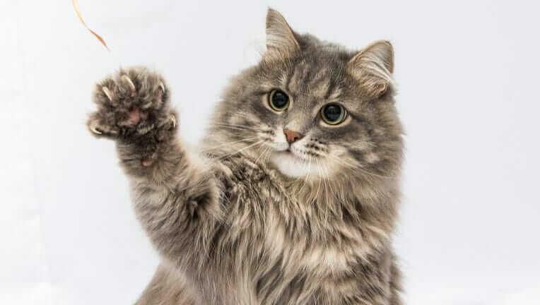 猫 注意の仕方