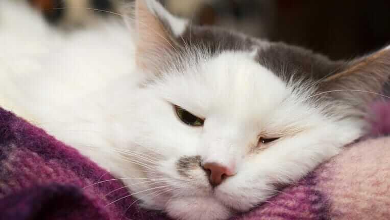 猫 病気 異変