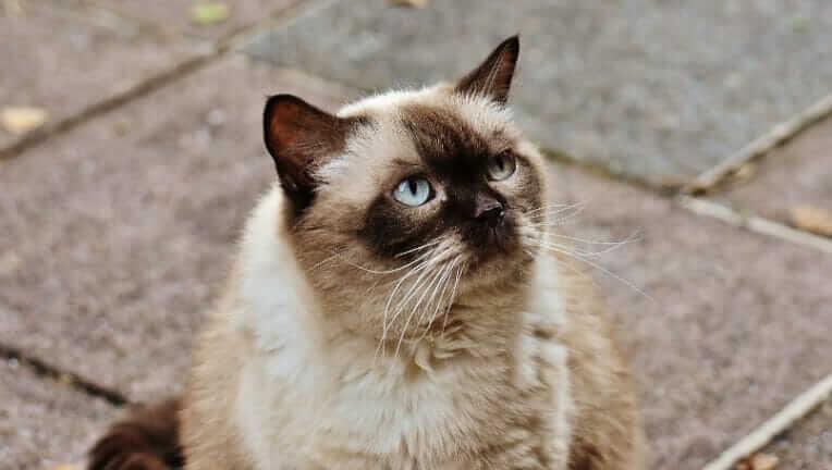猫の平均寿命