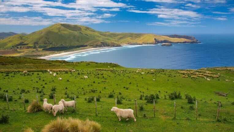 ニュージーランド 羊 鳥