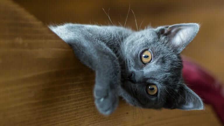 猫 去勢しないとどうなる