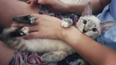 猫は気持ちいいと噛む?どんな気持ちなのか教えて!