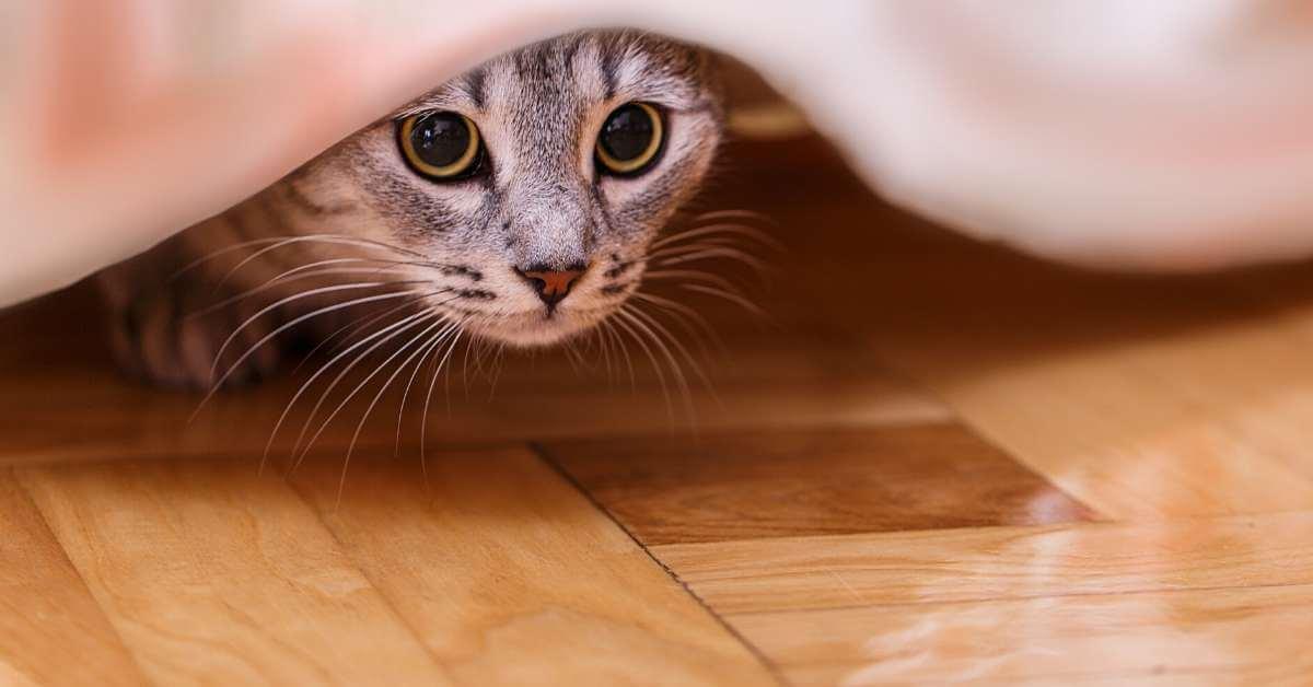 猫のご飯の回数を減らあす