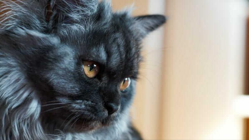 猫のご飯の回数の減らし方