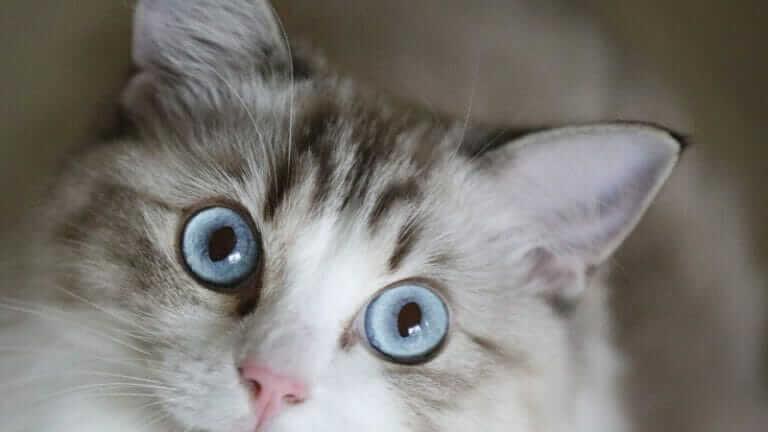 猫 喜ぶ しぐさ