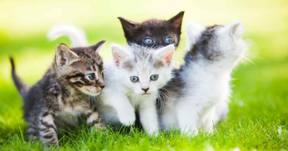 猫 チュール