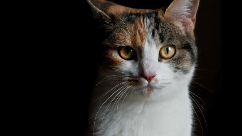 ノートパソコンに猫が乗る