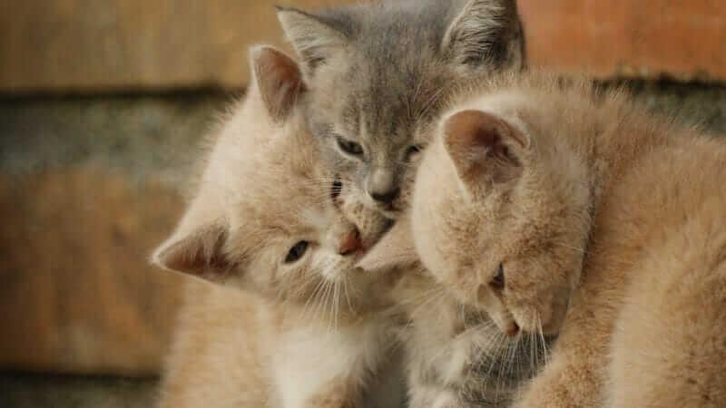 チュールは猫にとってやばい