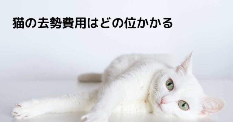 猫の去勢費用