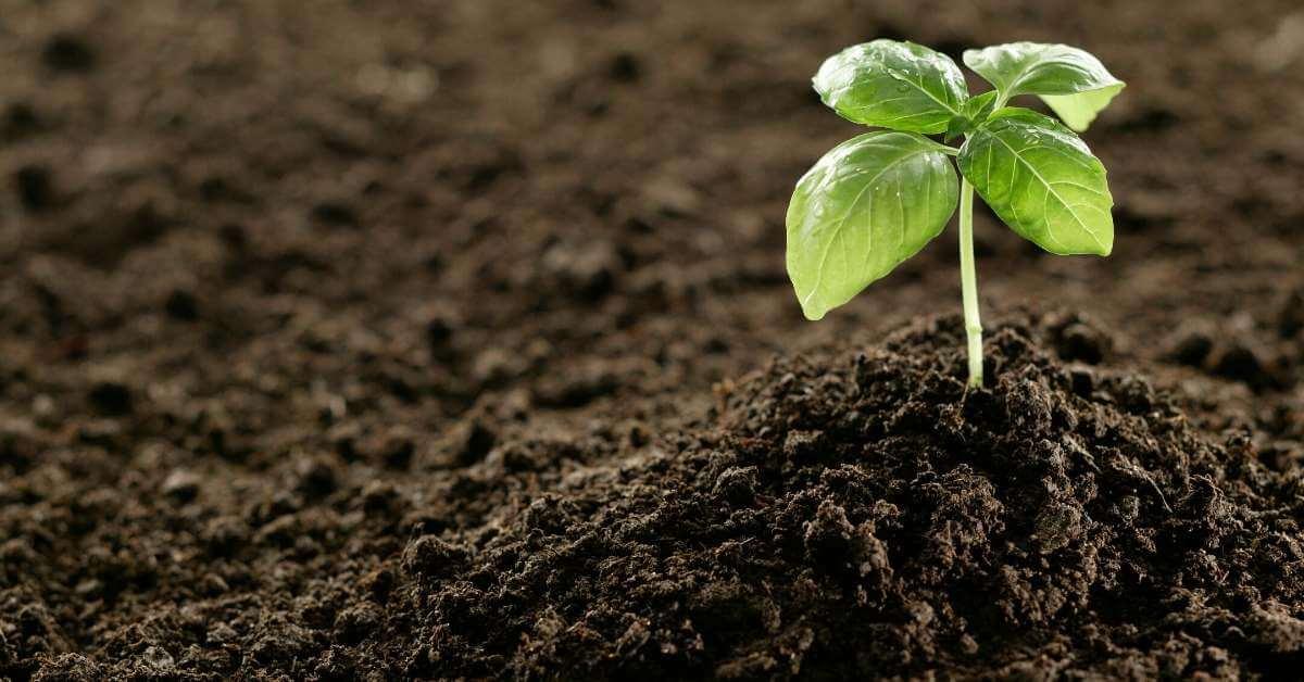 肥料の三要素 成分