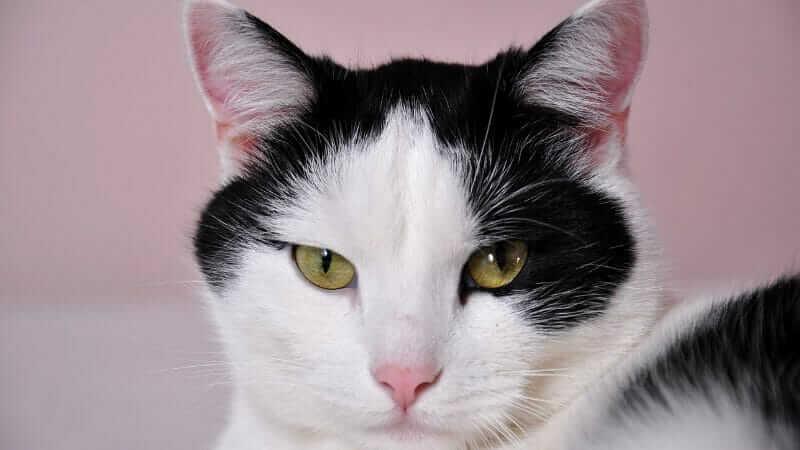 ベランダに猫が来る