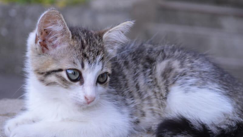 猫の避妊手術の助成金