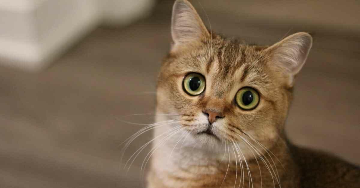 猫 ニキビ