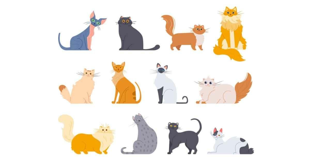 猫 避妊手術 助成金