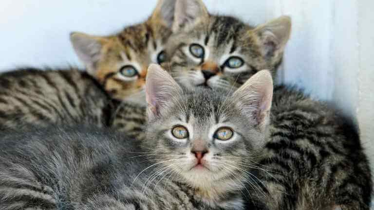 猫の目やに