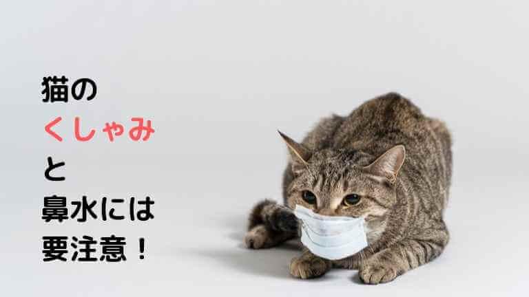 猫のくしゃみと鼻水