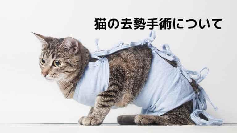 猫の去勢手術