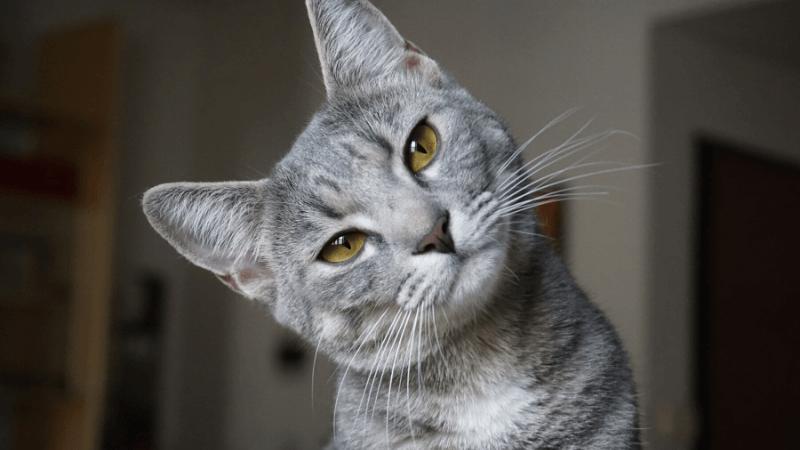 猫の避妊手術の失敗について