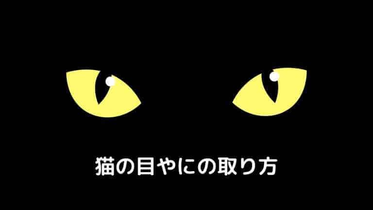 猫の目やにの取り方