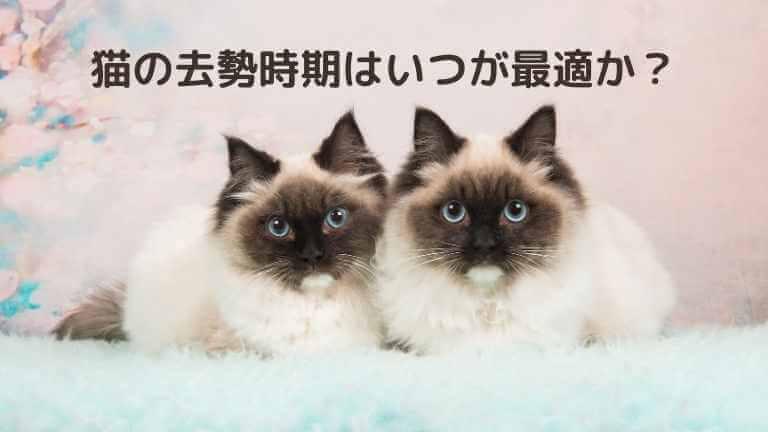 猫の去勢時期