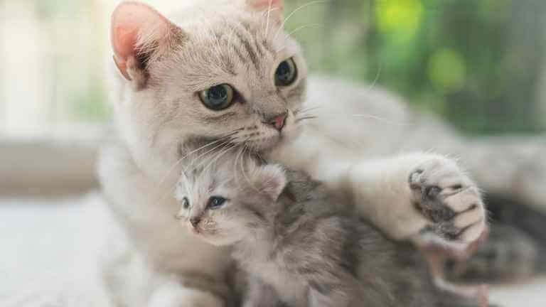 猫の目やにの取り方 (1)