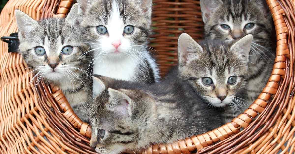 猫の多頭飼い トイレについて (1)