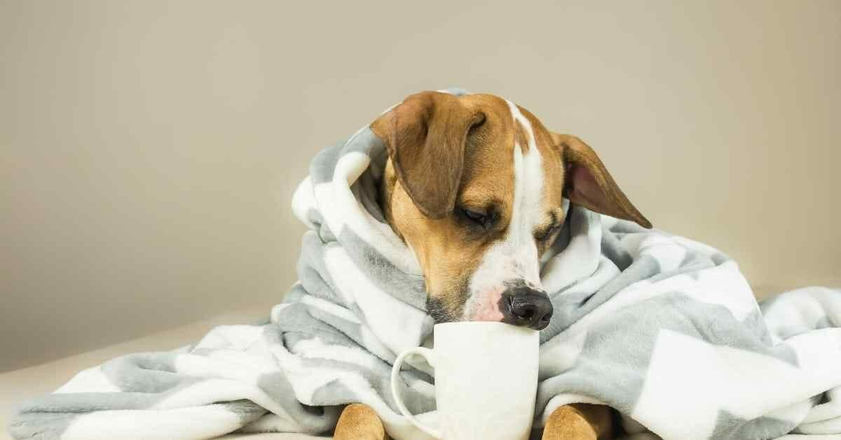 犬にコーヒーは毒です