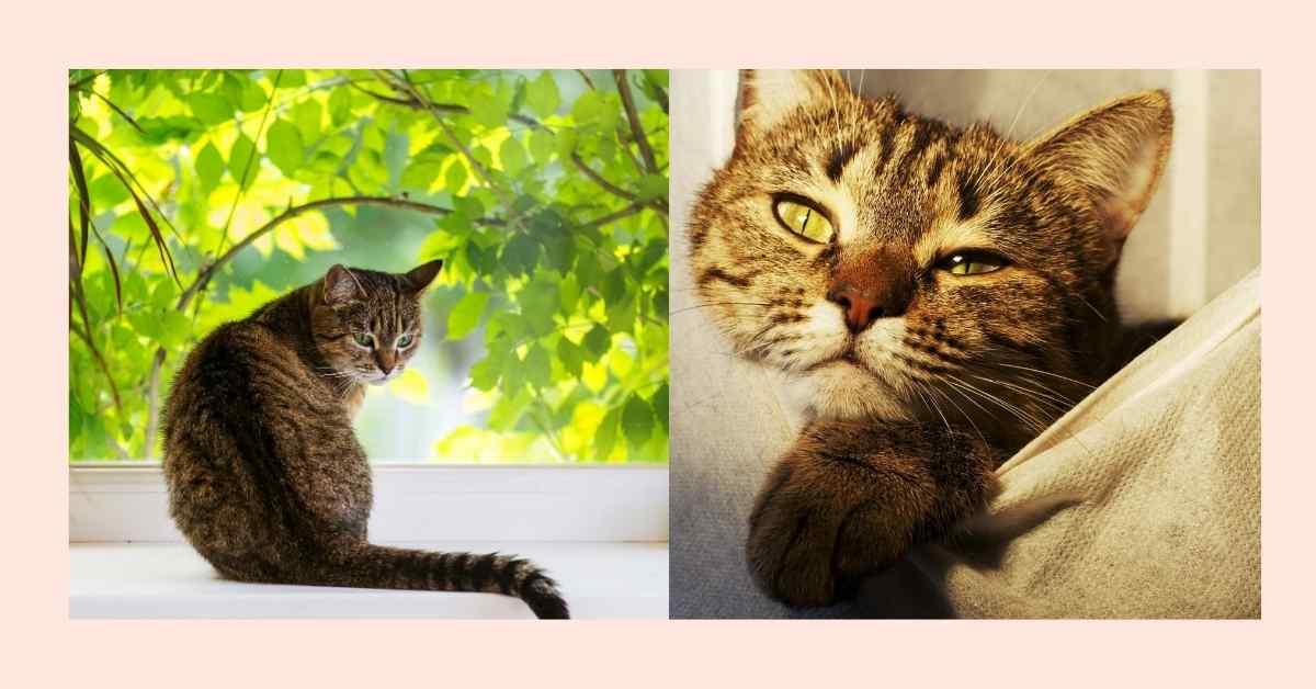 猫の鼻水 (1)