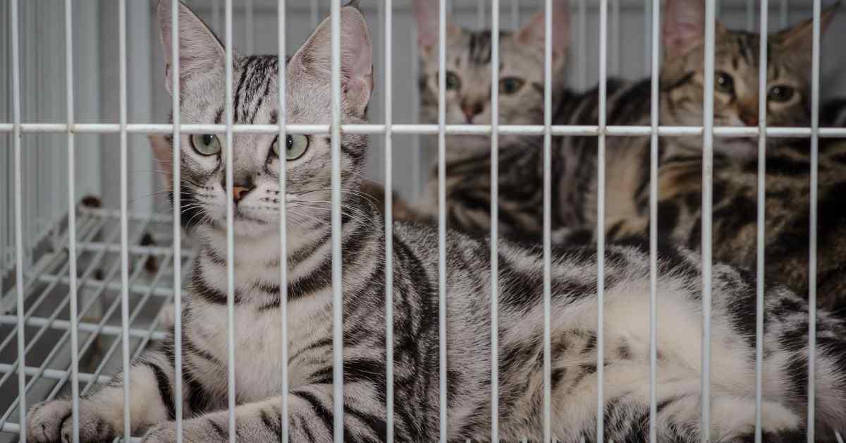 猫 ケージ飼いする時の注意
