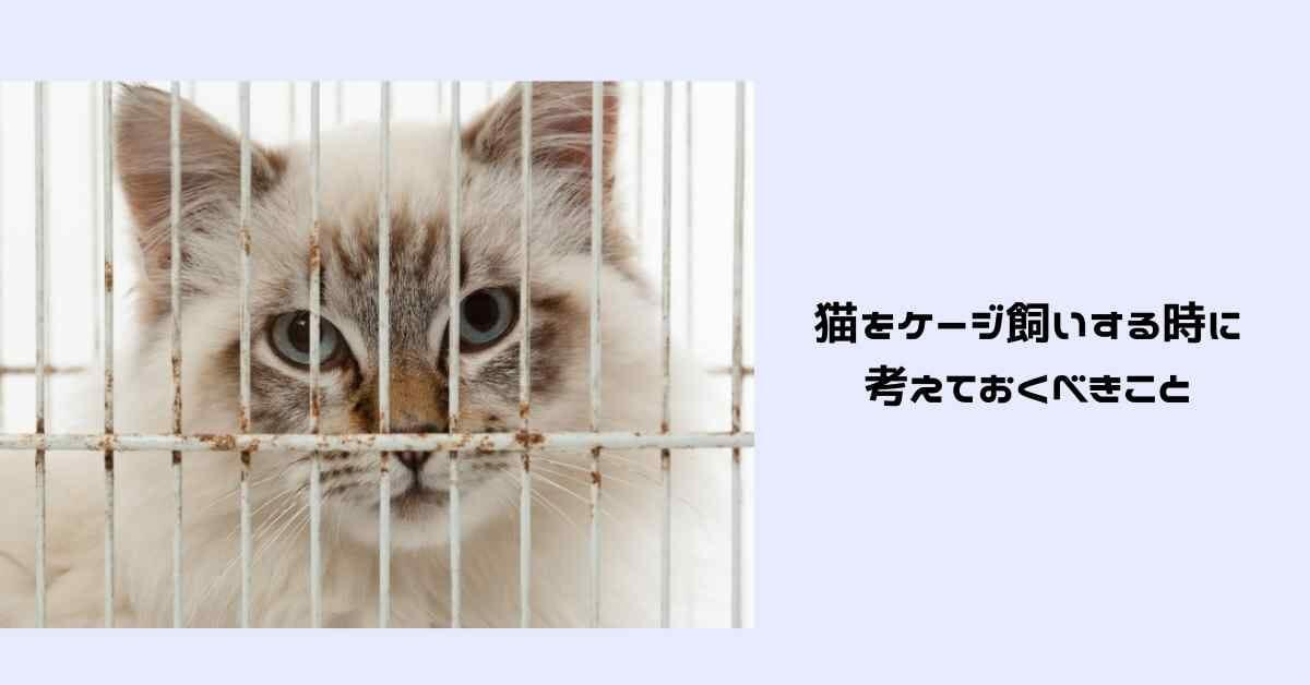 猫 ケージ飼い