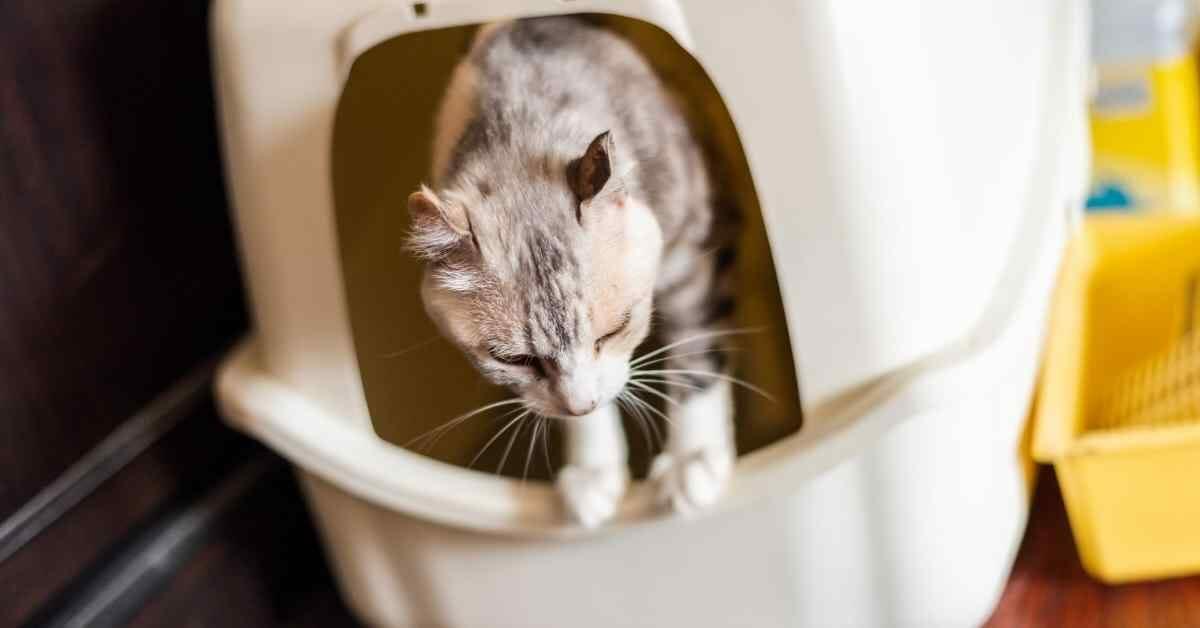 猫のトイレをしつける