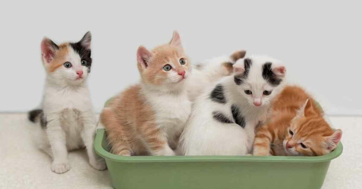 猫のトイレ しつけ