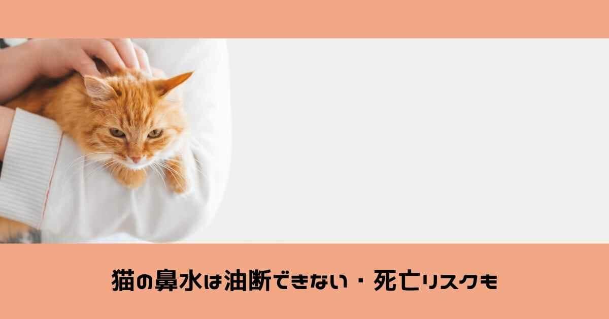 猫の鼻水は油断できない。死亡リスクもある