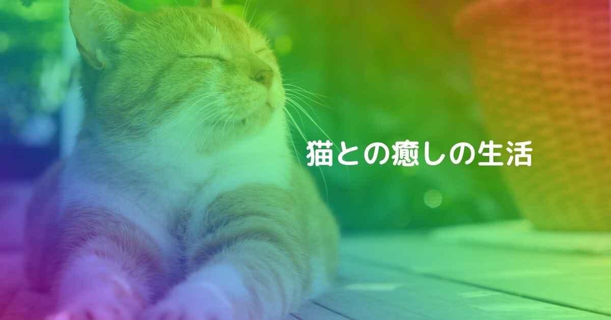 猫との癒しの生活