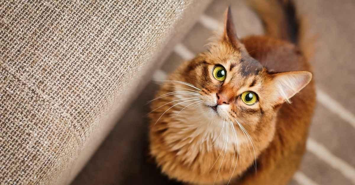 猫と暮らすには猫のことをもっとよく知っておきたい